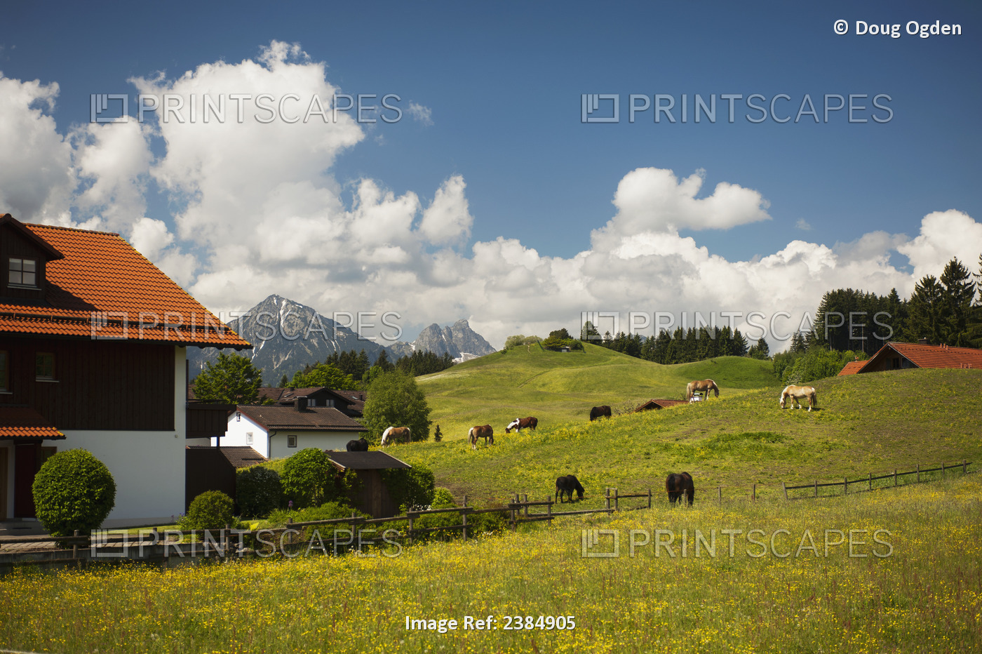 A Springtime Pastoral Scene In Southern Germany Across A Flowered Field With ...