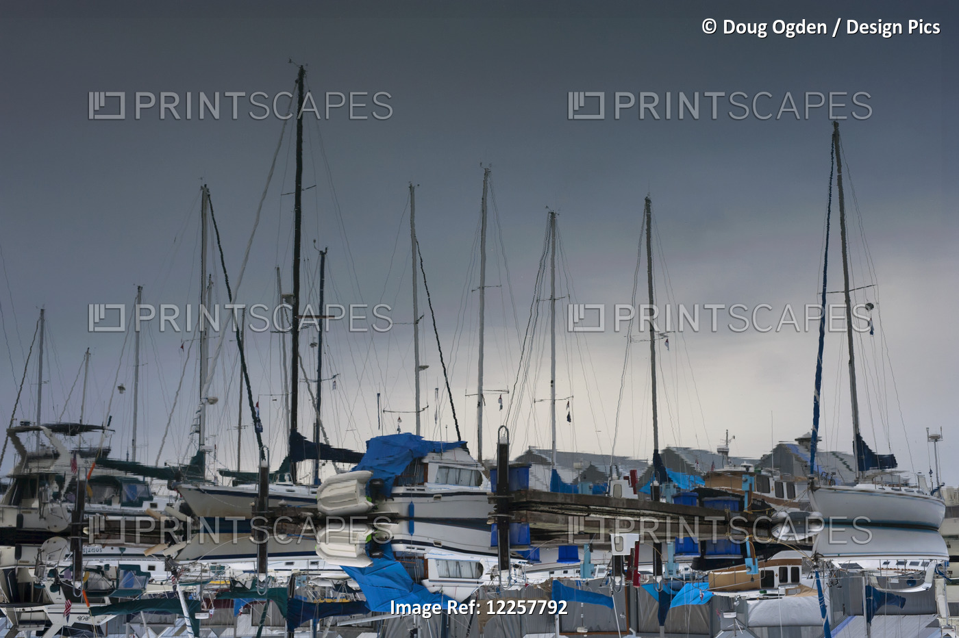 Mirror Image Reflection Of Sailboats In Tranquil Water; Olympia, Washington, ...